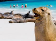 Unforgettable Galápagos 5 days/ 4 nights Tour