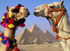 Kingdom of Egypt (with Overnight Sleeper Train) - 8 Days Tour