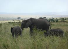 4 Day Queen Elizabeth National Park Safari Tour
