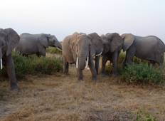 3 days Amboseli National Park Safari Tour