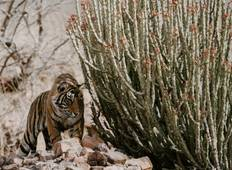 Essence of India with Ranthambore (End Jaipur, 8 Days) Tour