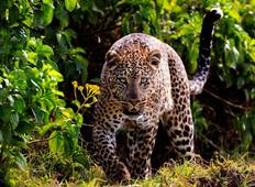 Magic of Kenya Safari Tour - 7 Days Tour
