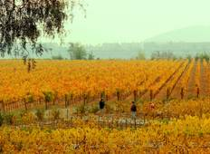 Santiago wineries & highlights Tour