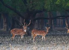 Sundarbans River Cruise – Wildlife Expedition Price Tour