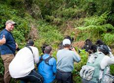 6 Day Chimpanzee and Gorilla Tracking Tour