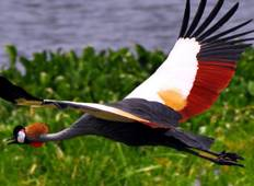 7 Day Bird Watching Tour Tour