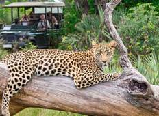 South Africa Discovery 17 Days Tour