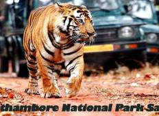 07 Days Ranthambhore Tiger Tour of Delhi, Agra, and Jaipur With 5 Star Hotel Tour
