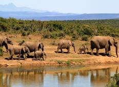 5-Day Safari (Lake Manyara / Serengeti Plains / Ngorogoro Crater) Tour