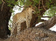 The Best of Kenya safari private and luxury safari 6 Days Tour