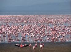 Discover the Magical Kenya in 13 Days Tour