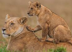 3 Days Fascination Northern Tanzania Budget Camping Safari Tour
