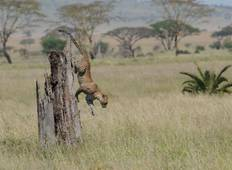 4 Days Amazing Serengeti Wildebeest Migration Special Family Safari. Tour