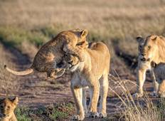 5 Days Predators In Action Northern Tanzania Budget Camping Safari Tour