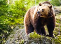 Bear Watching and Castle Hopping in Romania Tour