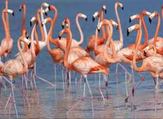 5 days of Flamingos, Henequen and Mayan Culture Tour