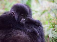 11 Days Gorillas & The Great Migration and Big Five Tour