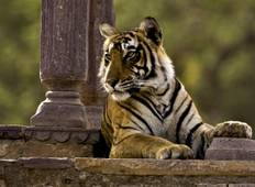Golden Triangle Excursion with Ranthambore Wildlife Safari Tour