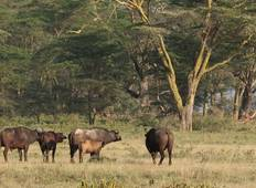7 Days Karibu Kenya Holiday Tour
