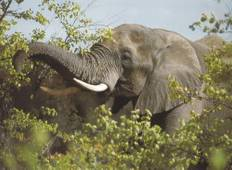 Addo, Garden Route & Winelands - 6 Days Tour