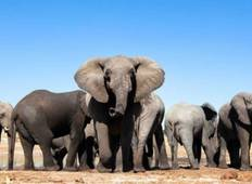Addo, Garden Route & Winelands - 8 Days Tour