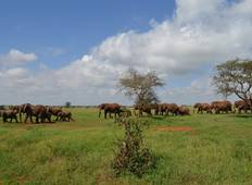 4 Days Masai Mara/Nakuru Group Joining Safari Tour