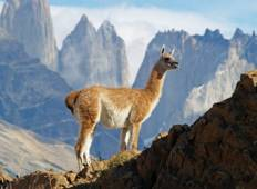 4-Days Discovery Puerto Natales & Torres del Paine Tour