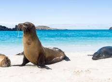 Wonders of Peru with Galápagos and Amazon Cruise 2020 Tour