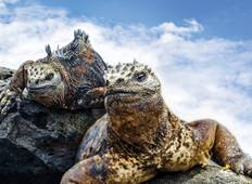 South America Galápagos and Cruising the Cape 39 Days Tour