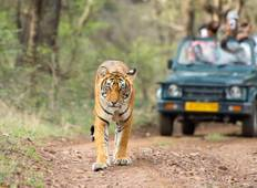 Golden Triangle with Tiger Safari Tour Tour