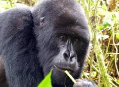 Gorilla Trekking- Bwindi Impenetrable Forest Tour