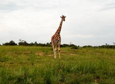 3 Days Murchison Falls NP Tour