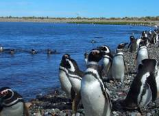 Buenos Aires & P. Madryn or Viceversa - 5 days  Tour