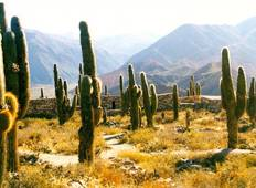 Salta & Tucumán or Viceversa - 5 days  Tour