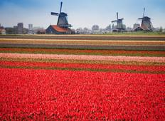 Tulip, Cheese and Windmills Easy Bike Tour Tour