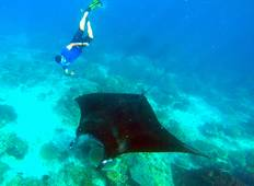 Explore Derawan 4 Day Tour