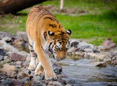 Adventures Ranthambore Wildlife Safari Tour from Delhi with Safari Rides Tour