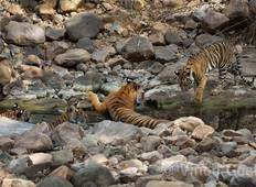 India Wildlife Safari Tour with Taj Mahal   Tour