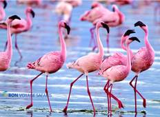 5 Days Bird watching & Wildlife in Kenya (Kakamega Forest & Lake Nakuru) Tour