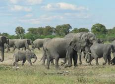 6 Days Mokoro Safari Experience  Tour