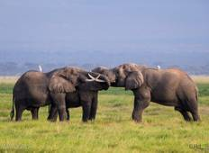 3 Days Amboseli Elephant tour Tour