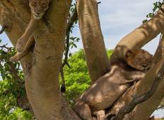 Wildlife Safari Uganda Tour