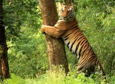 Corbett National Park & Nainital Tour from New Delhi  Tour