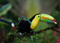 Costa Rica: A World of Nature featuring Tortuguero National Park, Arenal Volcano & Manuel Antonio National Park (7 destinations) Tour