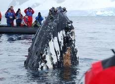 Antarctic Whale Journey Tour