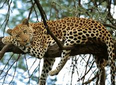 Kruger Nationalpark Big 5 Safari - 3 Tage Rundreise