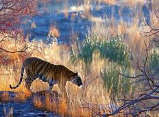 10 Days India Tiger Safari Trip Tour
