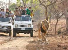 Sasan Gir with Somnath Dwarka Tour Tour