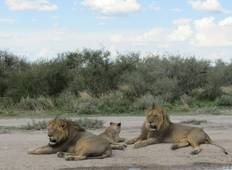 12 Days Self Drive Family Safari Namibia (Camping) Tour