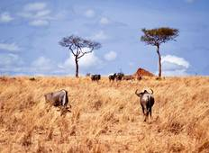 4 Days Serengeti Camping Safari Tour